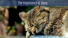 If you want a better day, hit the hay: The indisputable Importance of sleep